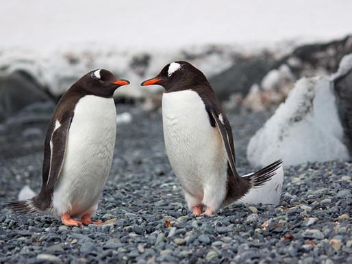 18,3°C in der Antarktis. Alles cool?