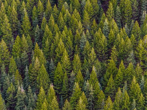 Unser Wald: Kulturschatz im Klimawandel