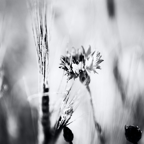 Flower Power, sw