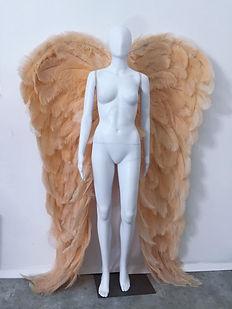 WingsChampagneXL.jpg