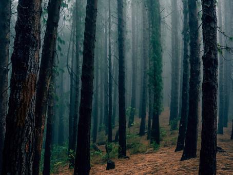 Trees, Trees, Trees - Biomass