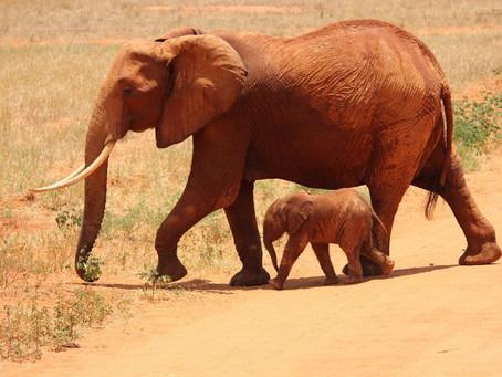 Protection of Nature/Biodiversity