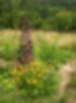 Horizon permaculture