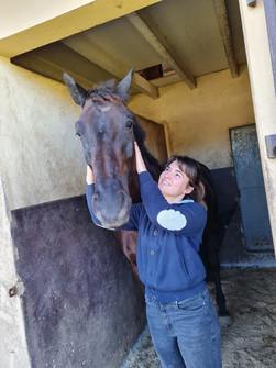 massage équin, massage du cheval bayonne, massage équin pays-basque, massage sportif équin landes