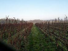 vigne, charente, charente-maritime, vignoble, nature, vignoble