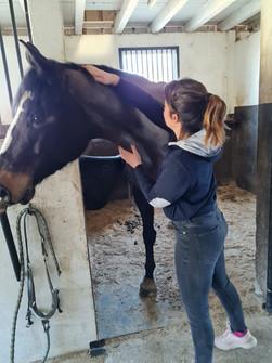 massage cheval cso, bien-être cheval, stress cheval, muscles du cheval, massage sportif