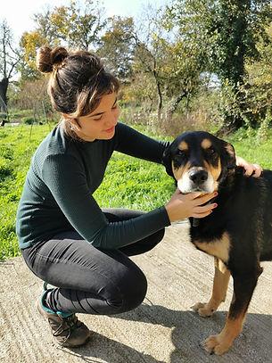 kinésiologie animale, kinésiologie chien, bien-être animal, stress animal, soin animal, technique alternative animaux,