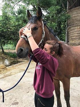 kinésiologie animale, cheval, sport, concours