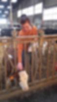 kinésiologie animale, vache, troupeau, animaux d'élevage