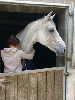 Massage du cheval, kinésiologie équin, kinésiologue cheval, communication animale