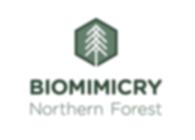 Biomimicry Northern Forest Logo.png