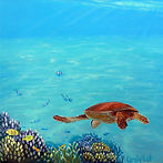 turtle-small2-closetotheedge.JPG