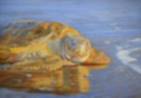 Carole Elliot's turtle painting