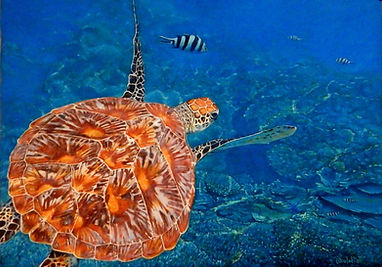 A sea turtle cruising the reef surrounding Lady Musgrave Island on the Great Barrier Reef by Carole Elliott Artist