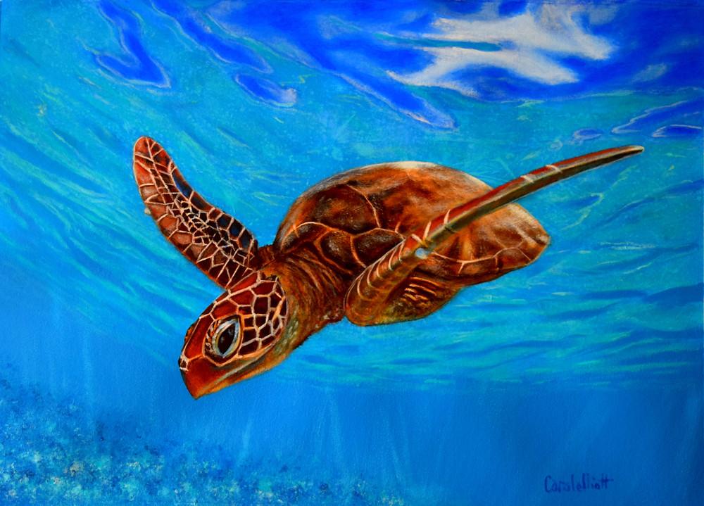 Turtle - Puddle by Carole Elliott