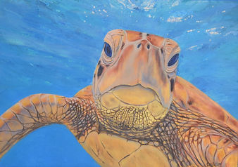 Carole Elliott's turtle painting