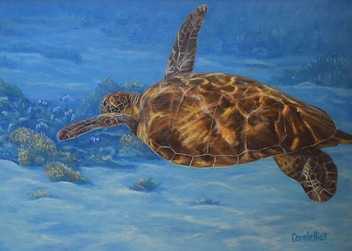 Sea turtle art from Lady Elliot Island painted by Carole Elliott Artist