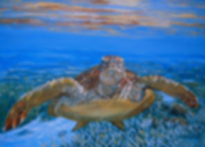 Sea Turtle on the Great Barrier Reef by Carole Elliott Artist