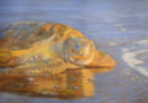 Turtle painting by Carole Elliott