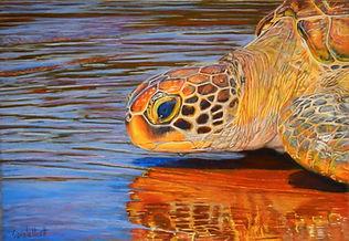pastel-turtleportrait-finished-reflectionsofhope.JPG