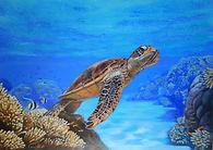 Turtle-Tahki2.JPG
