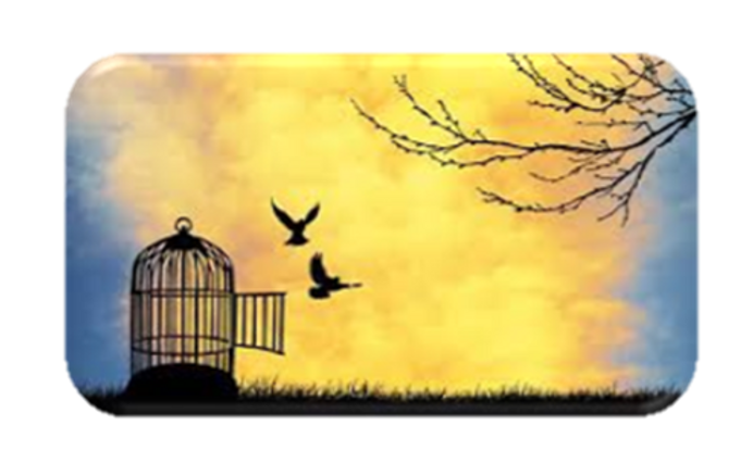 Birds flying free from cage