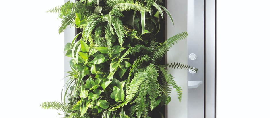 Improve aesthetics and air quality in your office with Hush Green Wall