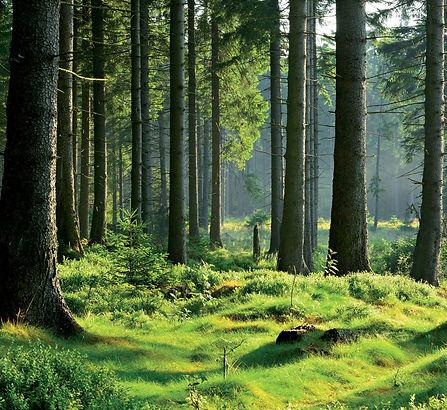 HUSH_green_forest.jpg