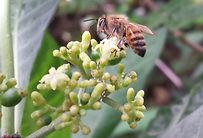 honeybee_edited.jpg