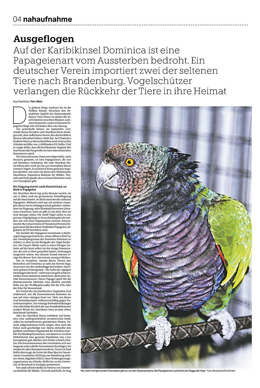 papageien tom allan-page-001.jpg