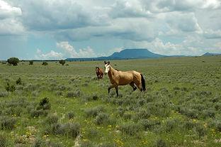 HORSE RANCH_orig.jpg