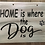 Thumbnail: Home is where the dog is