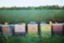 beehives in field_edited.jpg