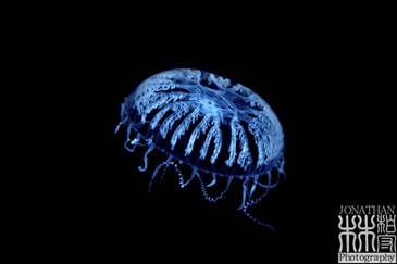 Underwater-3104.jpg