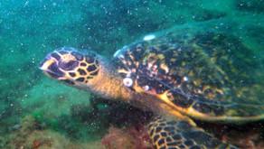 Pulau Hantu - 30 August 2020