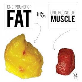 Diabetes Prevention Program Muscle vs Fat