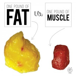Fat versus Muscle??