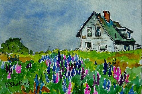 Lupin Fields | Pat Shattuck