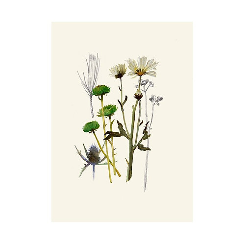 Daisy, Sea Holly + Pine Print | Briana Corr Scott