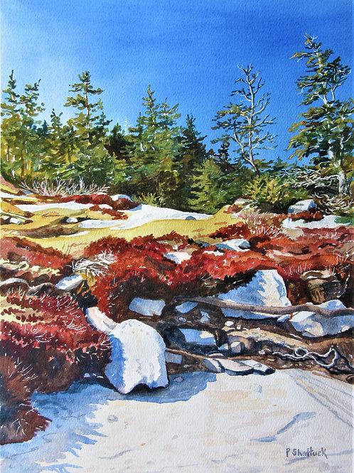 Coastal- Original Painting | Pat Shattuck