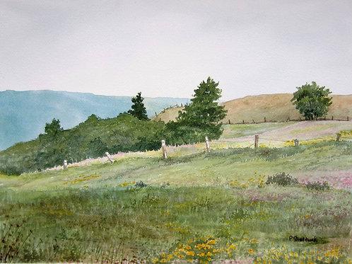 High Summer- Original Painting | Pat Shattuck