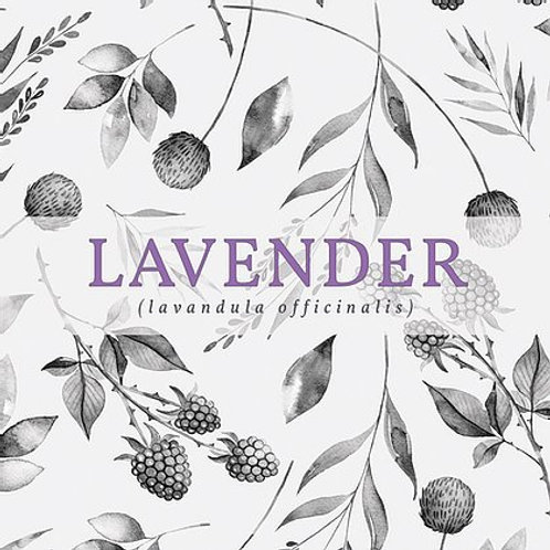 Lavender Candle | New Scotland Candle Co.