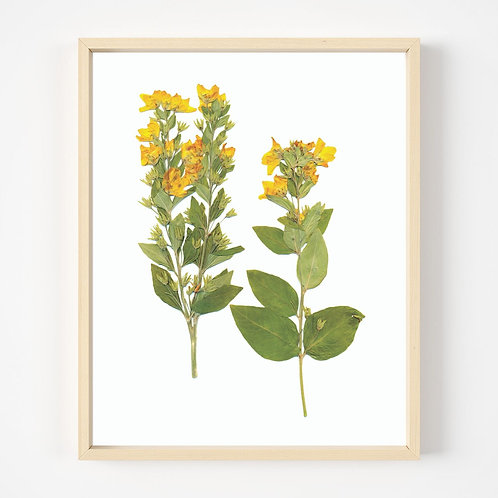 Pressed Flower Prints   Oake Living