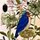 Thumbnail: Moth, Beetle, Bird Card | Briana Corr Scott