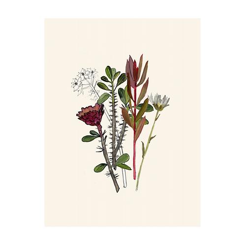 Botanical Print   Briana Corr Scott