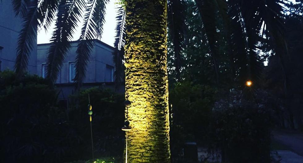 iluminacion de Palmera