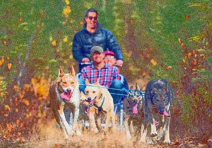 Illustrationsfoto - Hundeschlittenfahrt