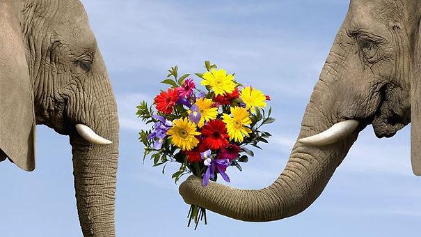 elefante fiori.jpg
