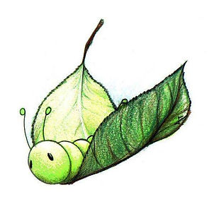 Bruco-foglia-farfalla.jpg