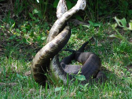 Even snakes are afraid of snakes. (Steven Wright)